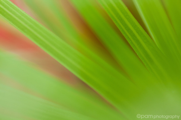 Close-up abstract image of green leaves with red background