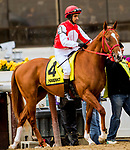 DECEMBER 01, 2018 : #4, Gladiator King in the Remsen  Stakes at Aqueduct Racetrack on December 24, 2018 in Ozone Park, NY.  Sue Kawczynski/ESW/CSM
