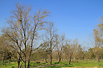 Beeri forest