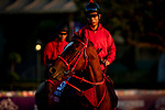 OCT 27: Breeders' Cup Sprint entrant Matera Sky, trained by Hideyuki Mori,  at Santa Anita Park in Arcadia, California on Oct 27, 2019. Evers/Eclipse Sportswire/Breeders' Cup