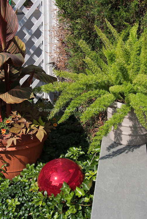 Asparagus fern in pot container garden on wall, canna in pot with sweet potato vine Ipomoea, red gazing ball