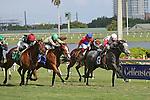 January 02, 2016: #13 Hold Harmless (KY) with jockey Joel Rosario on board breaks her maiden at Gulfstream Park in Hallandale Beach, FL.  Liz Lamont/ESW/CSM