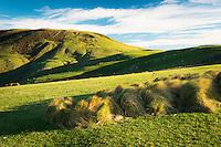 Farmland on Otago Peninsula, Coastal Otago, East Coast, New Zealand