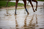 BALTIMORE, MD - MAY 17:  Justify's hooves splash through the mud while completing preparations for the Preakness Stakes at Pimlico Racecourse on May 17, 2018 in Baltimore, Maryland. (Photo by Alex Evers/Eclipse Sportswire/Getty Images)