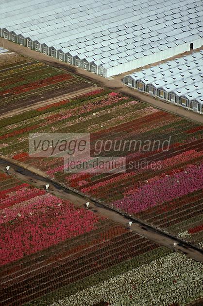 Europe/France/Pays de la Loire/49/Maine-et-Loire/Env de Saumur: Cultures horticoles -  vue aérienne