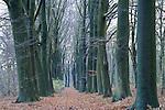 Europa, DEU, Deutschland, Nordrhein Westfalen, NRW, Rheinland, Niederrhein, Geldern, Naturschutzgebiet Fleuthkuhlen, Baeume, Buchen, Allee, Baumallee, Buchenallee, Kategorien und Themen, Natur, Umwelt, Landschaft, Jahreszeiten, Stimmungen, Landschaftsfotografie, Landschaften, Landschaftsphoto, Landschaftsphotographie, Naturschutz, Naturschutzgebiete, Landschaftsschutz, Biotop, Biotope, Landschaftsschutzgebiete, Landschaftsschutzgebiet, Oekologie, Oekologisch, Typisch, Landschaftstypisch, Landschaftspflege<br /> <br /> [Fuer die Nutzung gelten die jeweils gueltigen Allgemeinen Liefer-und Geschaeftsbedingungen. Nutzung nur gegen Verwendungsmeldung und Nachweis. Download der AGB unter http://www.image-box.com oder werden auf Anfrage zugesendet. Freigabe ist vorher erforderlich. Jede Nutzung des Fotos ist honorarpflichtig gemaess derzeit gueltiger MFM Liste - Kontakt, Uwe Schmid-Fotografie, Duisburg, Tel. (+49).2065.677997, <br /> archiv@image-box.com, www.image-box.com]