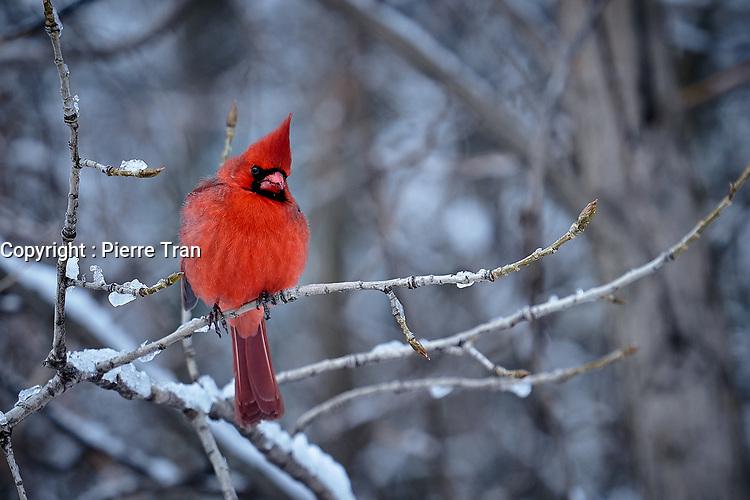 Animaux dans la nature a Montreal et les environs, 2021<br /> <br /> Photo : Pierre Tran - AQP