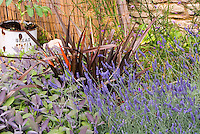 Herb Garden with English lavender - Lavandula angustifolia in flower, Culinary Sage - Salvia officinalis - Phormium, charming rustic rusting bread antique container, wicker wal