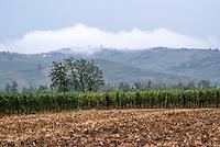Oltrepò Pavese, vigneti presso Broni (Pavia) --- Vineyards near Broni (Pavia) in the Oltrepò Pavese