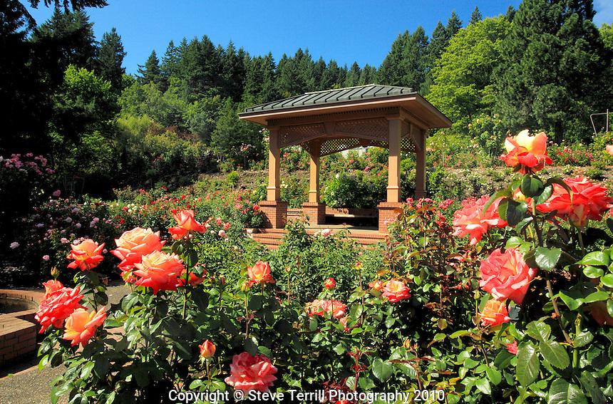 Portland International Rose Test Gardens in Washington Park in Portland.Oregon
