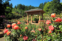 Portland International Rose Test Gardens in Washington Park in Portland.Oregon