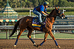 ARCADIA, CA  OCTOBER 30:  Breeders' Cup Distaff entrant Blue Prize, trained by Ignacio Correas,  exercises in preparation for the Breeders' Cup World Championships at Santa Anita Park in Arcadia, California on October 30, 2019. (Photo by Casey Phillips/Eclipse Sportswire/CSM)