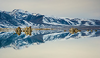 A fine art panorama landscape image of Mono Lake in winter, with its calm waters providing mirror-like reflections of the blue shadows and white snow of nearby mountains.  Tufas in the foreground that interrupt the mountain reflection superimpose reflections of their own.  Mono Lake is found in the Eastern Sierras region of California.  The textured contours of tufas in the foreground create contrast with the smooth lines of the lake and mountain reflections of blue shadows and white snow.