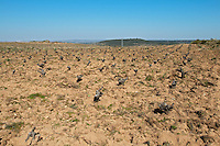 sandy soil, vineyard Bodega La Setera, DO Arribes del Duero spain castile and leon