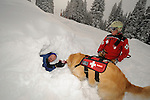 Vail Mountain's avalanche rescue dog, Henry, a Labroador, in a rescue training drill to find a buried skier on the summit of Vail mountain.