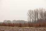 Europa, DEU, Deutschland, Nordrhein Westfalen, NRW, Rheinland, Niederrhein, Toenisberg, Herbst, Ackerflaeche, Agrarlandschaft, Baeume, Pappeln, Pappelbaeume, Kategorien und Themen, Natur, Umwelt, Landschaft, Jahreszeiten, Stimmungen, Landschaftsfotografie, Landschaften, Landschaftsphoto, Landschaftsphotographie, <br /> <br /> [Fuer die Nutzung gelten die jeweils gueltigen Allgemeinen Liefer-und Geschaeftsbedingungen. Nutzung nur gegen Verwendungsmeldung und Nachweis. Download der AGB unter http://www.image-box.com oder werden auf Anfrage zugesendet. Freigabe ist vorher erforderlich. Jede Nutzung des Fotos ist honorarpflichtig gemaess derzeit gueltiger MFM Liste - Kontakt, Uwe Schmid-Fotografie, Duisburg, Tel. (+49).2065.677997, <br /> archiv@image-box.com, www.image-box.com]