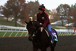 October 27, 2015: Golden Horn (GB), trained by John Gosden, and owned by Anthony Oppenheimer, is entered in the Breeder's Cup Longines Turf.  Candice Chavez/ESW/CSM