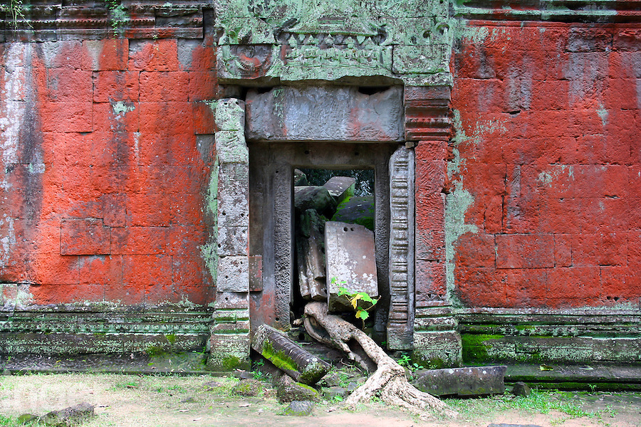Red lichens and ruins at Angkor Thom in Cambodia