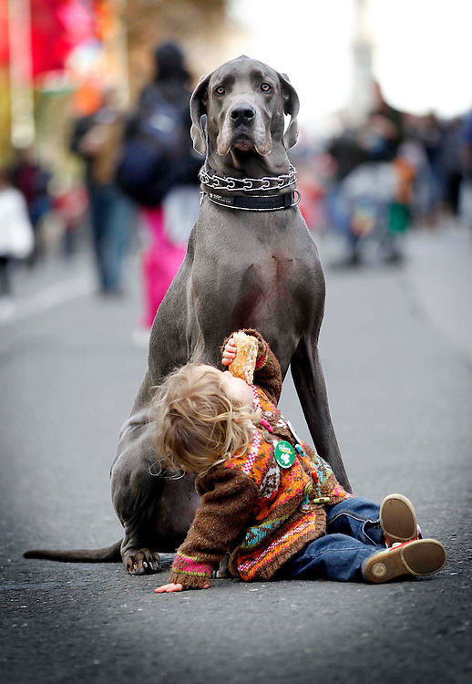 St. Patrick's Festival Big Day Out..Someone to watch over me...Olivia Hogg pictured with her 5year old Great Dane at the St. Patrick's Festival Big Day Out.