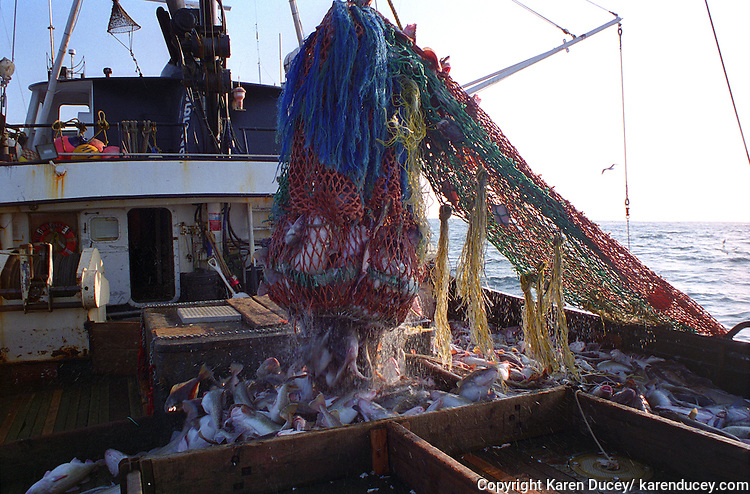 The F/V Windjammer, a dragger, also known as a trawler, fishes for pollock in the Bering Sea.