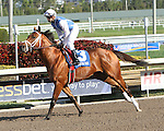 """Saltoi post parade. Point of Entry with John Velazquez wins the 30th running of the Kitten's Joy Gulfstream Turf Handicap (Grade 1) for 4-year olds & up, going 1 1/8 mile on the turf, at Gulfstream Park.  Trainer Claude """"Shug"""" McGaughey III.  Owner Phipps Stable"""