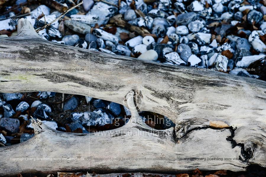 GERMANY, Ruegen, Nationalpark Jasmund , timber and stones at the beach/ DEUTSCHLAND, Rügen, Nationalpark Jasmund, Treibholz und Feuersteine am Strand