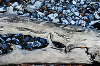 GERMANY, Ruegen, Nationalpark Jasmund , timber and stones at the beach/ DEUTSCHLAND, Rügen, Nationalpark Jasmund, Treibholz und Feuersteine am Strand