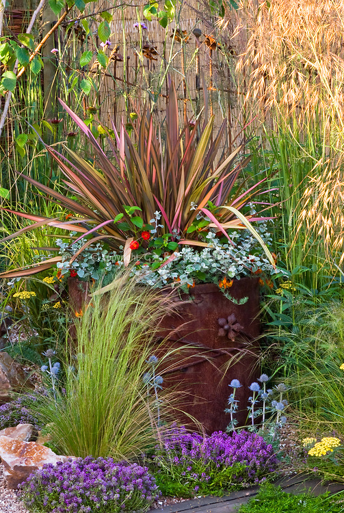 Foliage Container garden of foliage spiky leaved multi-colored specimen Phormium in wonderful rusted antique old iron pot with Helichrysum petiolare licorice plant and Lantana, with in ground garden plantings of thymes herbs Thymus, Achillea yarrow, Eryngium, and sunlight streaming thru ornamental grass, lots of mixed textures, colors, types and varying heights of plants for lots of interest