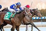 MARCH 09, 2019 : Haikal, ridden by Rajiv Maragh, wins the Gotham Stakes for 3-year olds at Aqueduct Racetrack on March  09, 2019 in Ozone Park, NY.  Sue Kawczynski/ESW/CSM