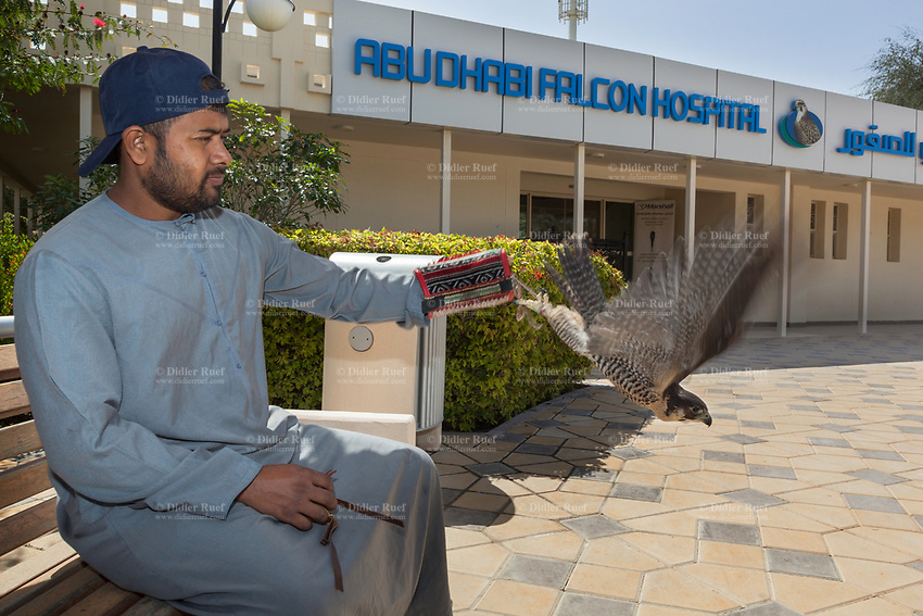 """United Arab Emirates (UAE). Abu Dhabi Falcon Hospital. An Emirati man seats on a bench and wait to enter into the hospital for his falcon's health checkup. The hospital is considered the leading center in the world for falcon medical care. It is equipped with everything a hospital requires for treating humans, except that the patients have wings. Falcons are birds of prey in the genus Falco, which includes about 40 species. Adult falcons have thin, tapered wings, which enable them to fly at high speed and change direction rapidly. Additionally, they have keen eyesight for detecting food at a distance or during flight, strong feet equipped with talons for grasping or killing prey, and powerful, curved beaks for tearing flesh. Falcons kill with their beaks, using a """"tooth"""" on the side of their beaks. The United Arab Emirates (UAE) is a country in Western Asia at the northeast end of the Arabian Peninsula. 19.02.2020  © 2020 Didier Ruef"""