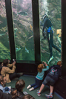 France, Bretagne, (29), Finistère, Brest: Océanopolis est un centre de culture scientifique consacré aux océans