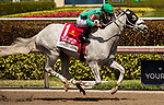 HALLANDALE BEACH, FL - March 31: Therapist, #1, charges home to win The Cutler Bay Stakes at Gulfstream Park on March 31, 2018 in Hallandale Beach, FL. (Photo by Carson Dennis/Eclipse Sportswire/Getty Images.)