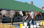 LOUISVILLE, KY - APRIL 24: Stable mates Creator (grey horse, front, left) and Gun Runner (chestnut horse, back, right) are bathed after galloping on the track at Churchill Downs in preparation for the Kentucky Derby. Both are trained by Steven M. Asmussen. (Photo by Mary M. Meek/Eclipse Sportswire/Getty Images)