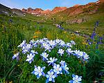 San Juan Mountains, CO<br /> American Basin with Colorado columbine (Aquilegia coerulea) and wildflower meadows beneath Handies Peak at sunrise