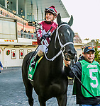 JANUARY 01, 2019 : Gates of Dawn  in post parade the Jerome Stakes for 3-year olds at Aqueduct Racetrack on January 01, 2019 in S. Ozone Park, NY.  Sue Kawczynski/ESW/CSM