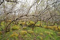 Carnach Woodland Wanderweg (Carnach Woodland Trail) nahe der Ortschaften Milltown und Applecross.<br /> Der Wanderweg fuehrt durch ein Gebiet der vor ca. 4.000 Jahren als mystischer Ort galt und von zahlreichen unterirdischen Energielinien durchzogen ist.<br /> 23.5.2015, Highlands/Schottland<br /> Copyright: Christian-Ditsch.de<br /> [Inhaltsveraendernde Manipulation des Fotos nur nach ausdruecklicher Genehmigung des Fotografen. Vereinbarungen ueber Abtretung von Persoenlichkeitsrechten/Model Release der abgebildeten Person/Personen liegen nicht vor. NO MODEL RELEASE! Nur fuer Redaktionelle Zwecke. Don't publish without copyright Christian-Ditsch.de, Veroeffentlichung nur mit Fotografennennung, sowie gegen Honorar, MwSt. und Beleg. Konto: I N G - D i B a, IBAN DE58500105175400192269, BIC INGDDEFFXXX, Kontakt: post@christian-ditsch.de<br /> Bei der Bearbeitung der Dateiinformationen darf die Urheberkennzeichnung in den EXIF- und  IPTC-Daten nicht entfernt werden, diese sind in digitalen Medien nach §95c UrhG rechtlich geschuetzt. Der Urhebervermerk wird gemaess §13 UrhG verlangt.]
