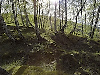 FOREST_LOCATION_90015