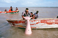 aboriginals of Boigu Island, Torres Straits, Australia, capture a dugong, Dugong dugon,