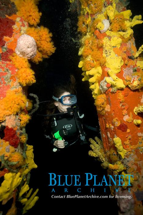 scuba diver explores coral encruseted Town Pier, Bonaire, Netherland Antilles, Caribbean, Atlantic