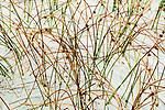 Grasses create patterns in dune sand, Grayland Beach, Washington.  Grayland Beach Stae Park.
