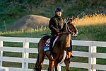 October 31, 2020: Dreamer'S Disease, trained by trainer Robertino Diodoro, exercises in preparation for the Breeders' Cup Juvenile at Keeneland Racetrack in Lexington, Kentucky on October 31, 2020. Scott Serio/Eclipse Sportswire/Breeders Cup/CSM