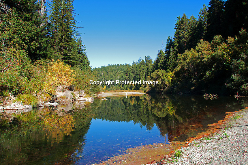 A beautiful day in the fall at Humbolt Redwood State Park, California. Looking up the Eel River.