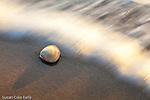 Clamshell in the surf at Nauset Light Beach, Cape Cod National Seashore, Eastham, Massachusetts, USA