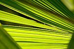 Europa, DEU, Deutschland, Nordrhein Westfalen, NRW, Ruhrgebiet, Bochum, Ruhr-Uni, Botanischer Garten, Pflanze, Detailaufnahmen, Kategorien und Themen, Natur, Umwelt, Pflanzen, Pflanzenkunde, Botanik, Biologie, ....[Fuer die Nutzung gelten die jeweils gueltigen Allgemeinen Liefer-und Geschaeftsbedingungen. Nutzung nur gegen Verwendungsmeldung und Nachweis. Download der AGB unter http://www.image-box.com oder werden auf Anfrage zugesendet. Freigabe ist vorher erforderlich. Jede Nutzung des Fotos ist honorarpflichtig gemaess derzeit gueltiger MFM Liste - Kontakt, Uwe Schmid-Fotografie, Duisburg, Tel. (+49).2065.677997, ..archiv@image-box.com, www.image-box.com]