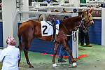 February 27, 2021 #2, Saffa's Day in the paddock for the Southwest Stakes (Grade III) at Oaklawn Racing Casino Resort in Hot Springs, Arkansas. Ted McClenning/Eclipse Sportswire/CSM