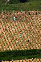 Vineyard workers spraying disease treatment. Monts Damnes. Domaine Henri Bourgeois, Chavignol, Sancerre, Loire, France