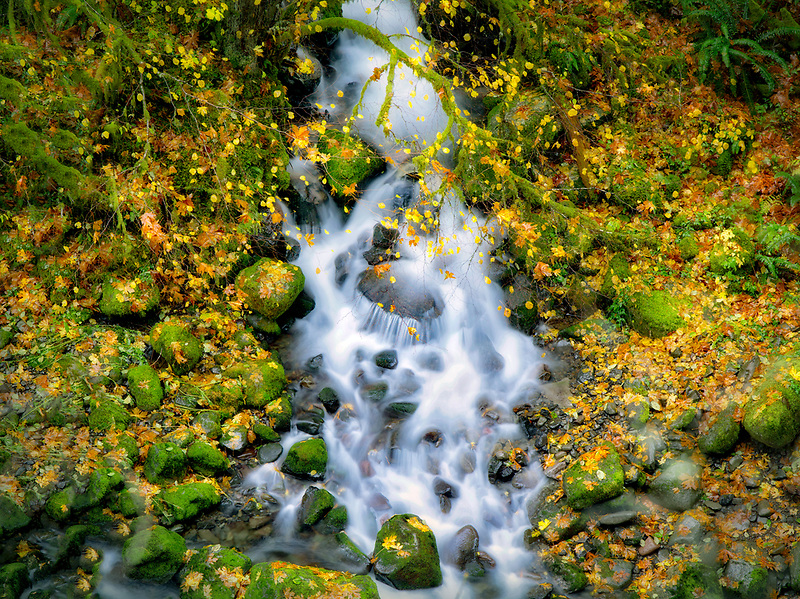 Small seasonal stream flowing into Eagle Creek.  Columbia River Gorge National Scenic Area, Oregon
