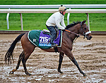 October 27, 2015 :  Tale of S'avall, trained by Barclay Tagg and owned by Charles E. Fipke, exercises in preparation for the Sentient Jet Breeders' Cup Juvenile at Keeneland Race Track in Lexington, Kentucky on October 27, 2015.  Scott Serio/ESW/CSM