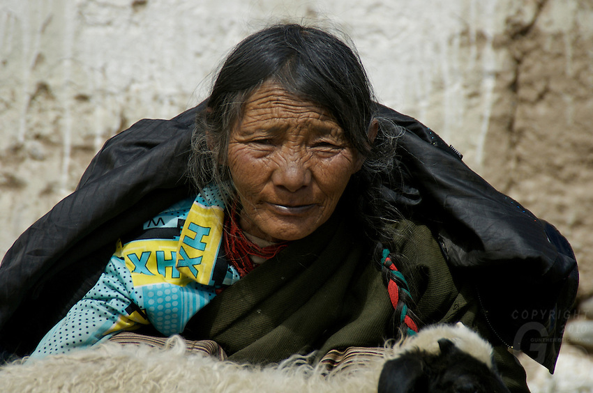On the way to Lhasa from Namtso Lake, Nomads getting ready for the winter, shearing sheep as this old women looking on while holding a sheep