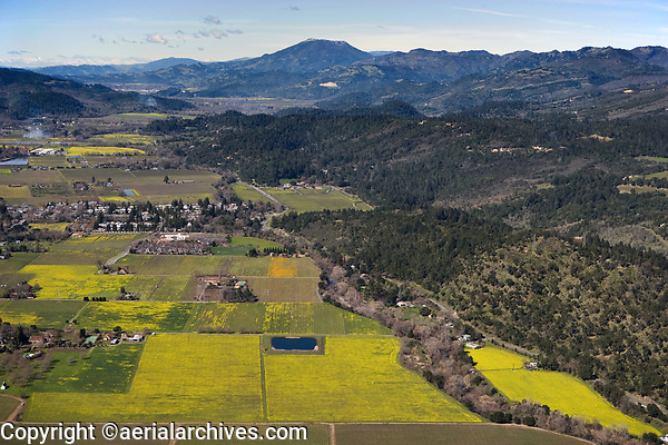 aerial photograph of mustard in  Napa Valley vineyards and the Napa River toward Mount St. Helena, Napa County, California in spring